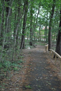 The path to our new library