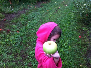 New England apple picking.