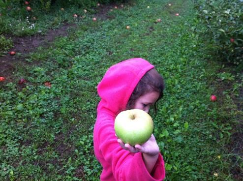 New England apple picking.