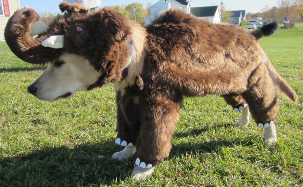 Woofy Mammoth