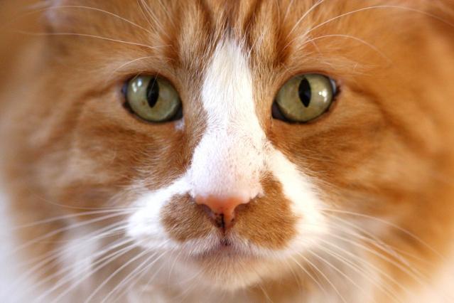 flickr_cat