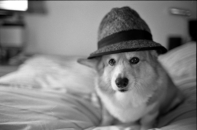 Dog Detective