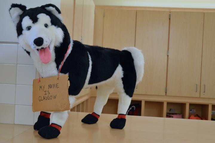 Iditarod Dog