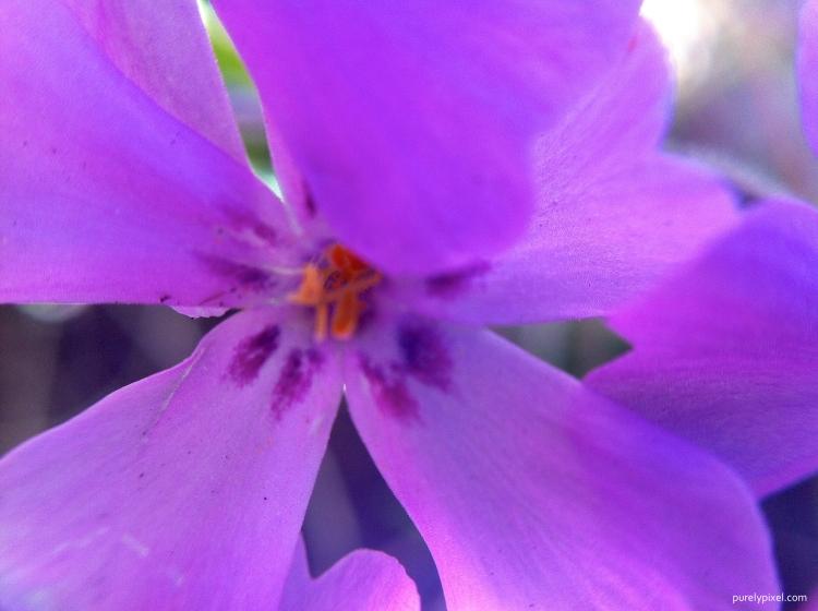 Purple Flower