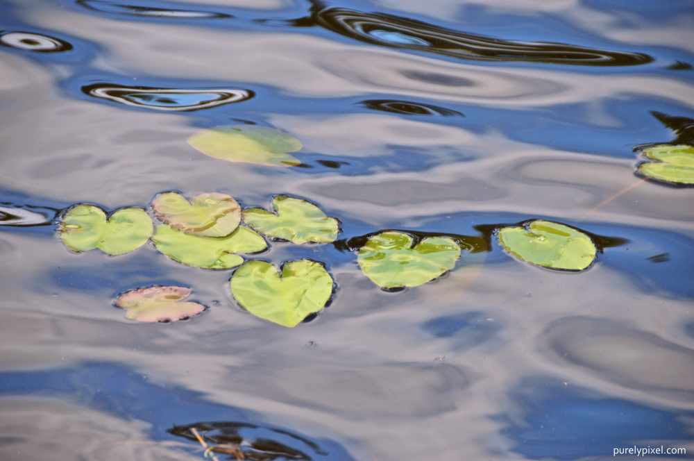 Lilypad Waves