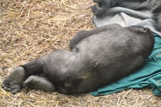 FranklinPark_animals 003