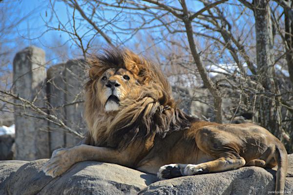 Franklin Park Zoo,Dorchester