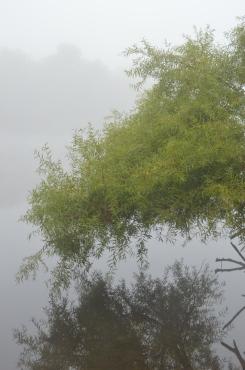 fogtree