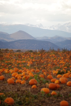 mountainpumpkins