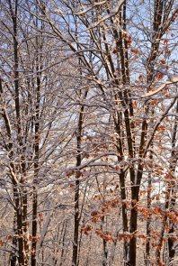 snowleaves