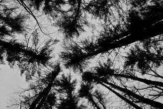 sywardtree