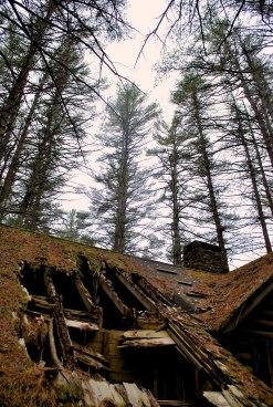wooddecay